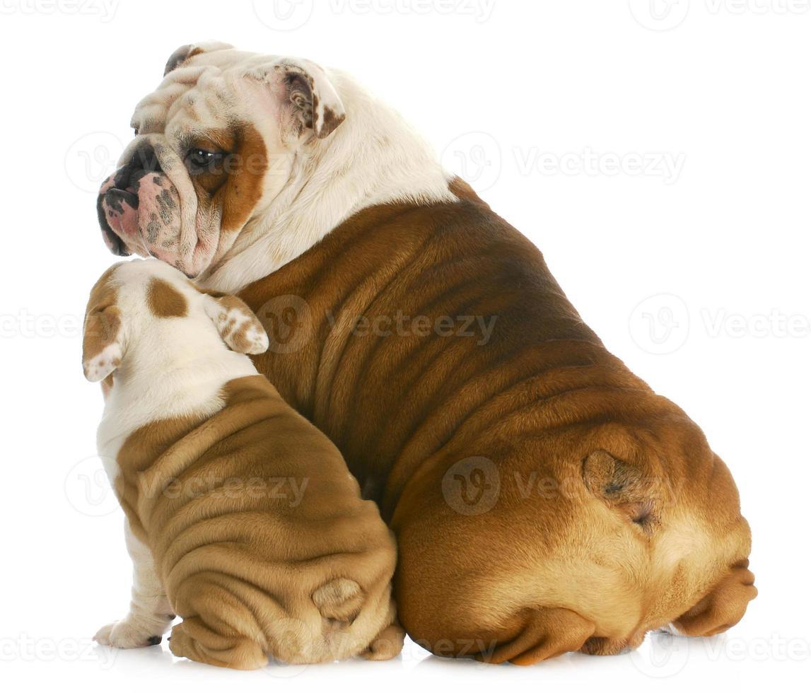 familia de perros foto