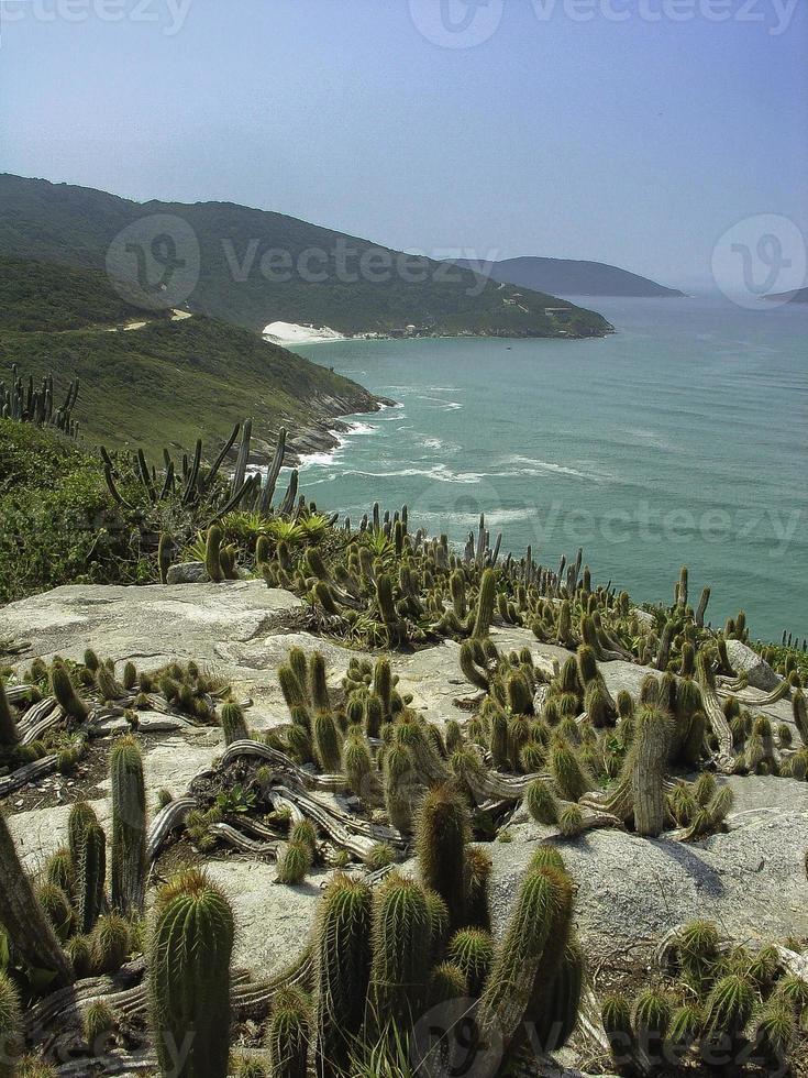 Cactus 9 photo