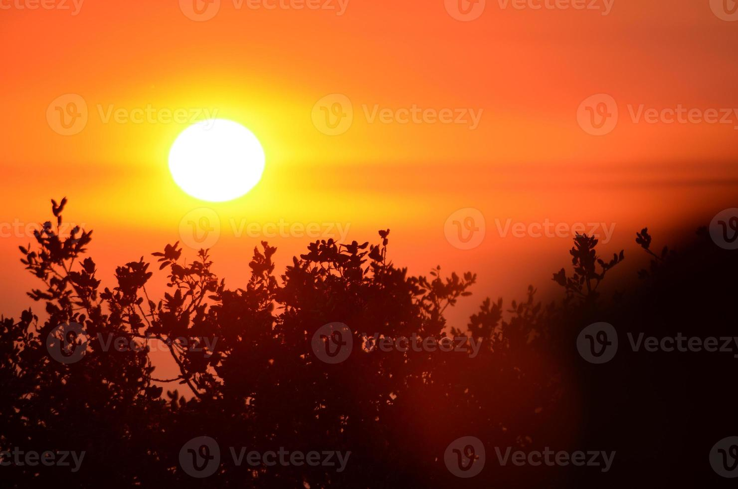 Sunset Over Branches photo