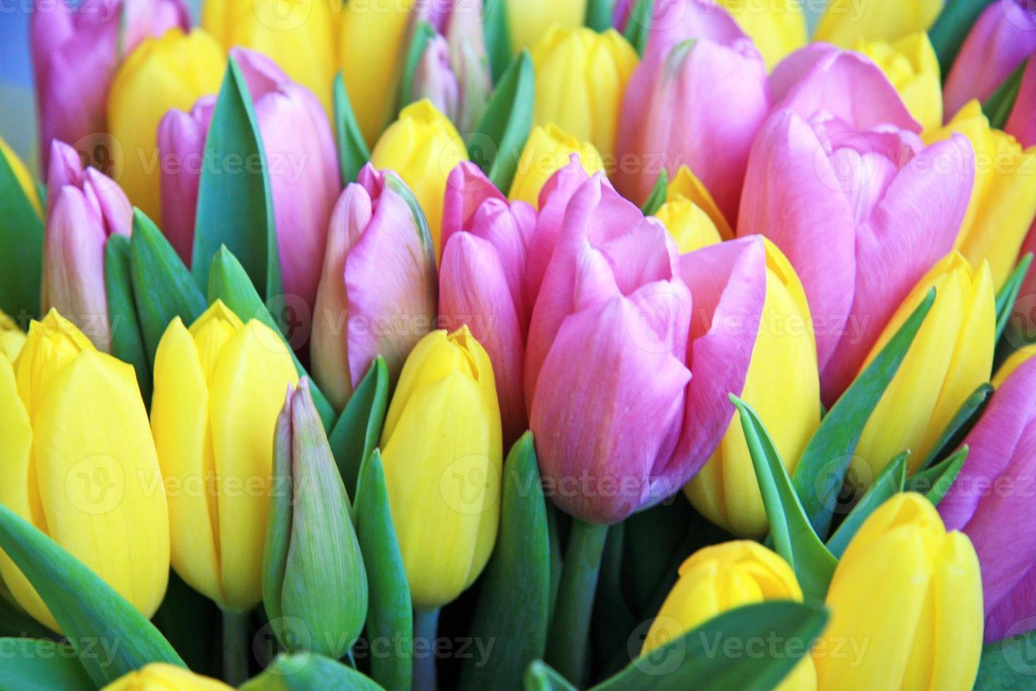 campo de tulipanes foto