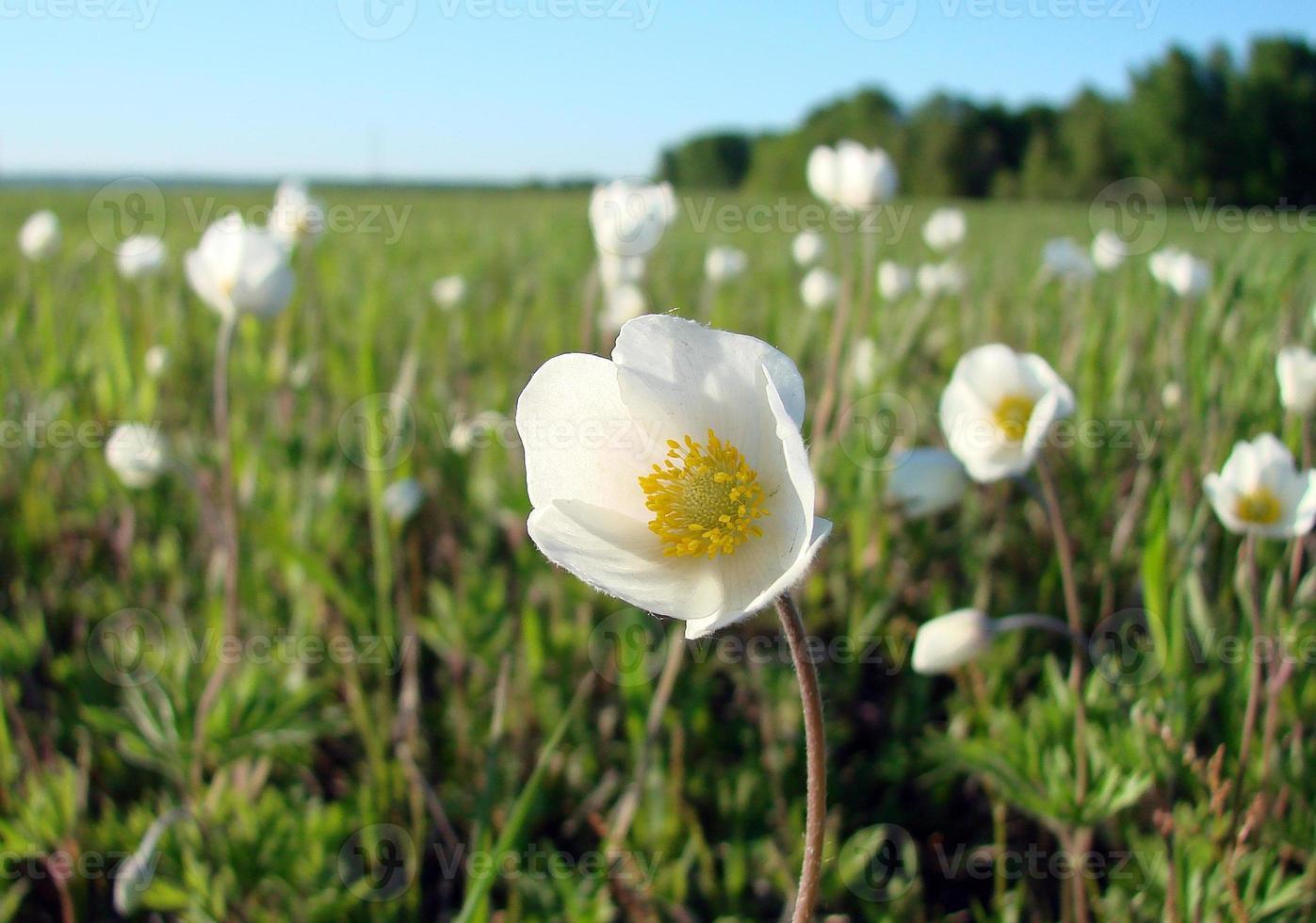 flores y hierba foto