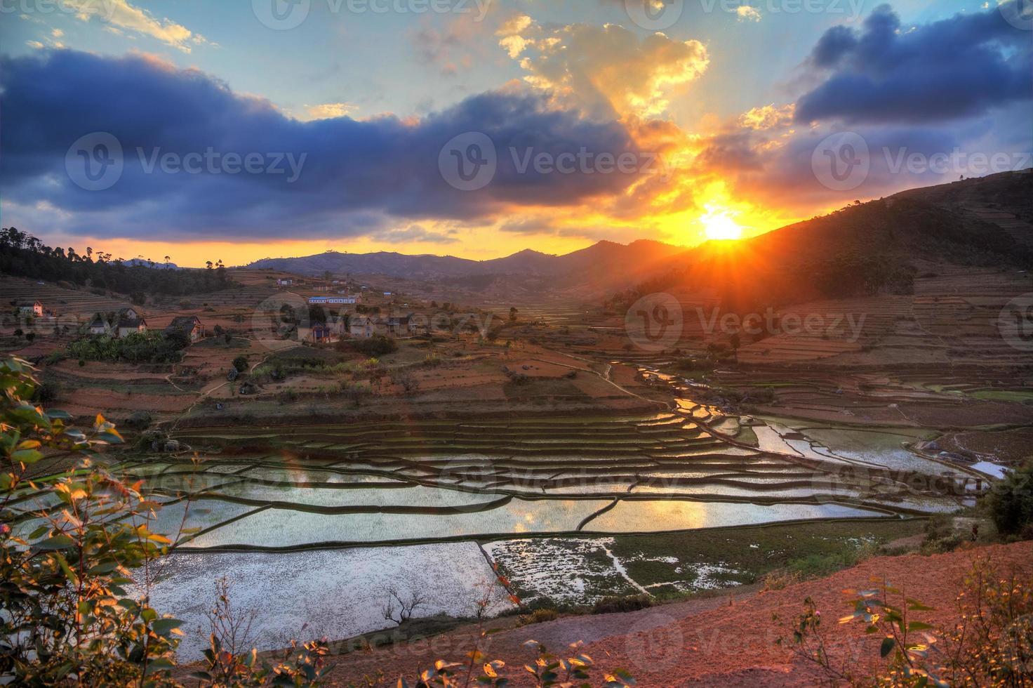 puesta de sol del campo de arroz foto