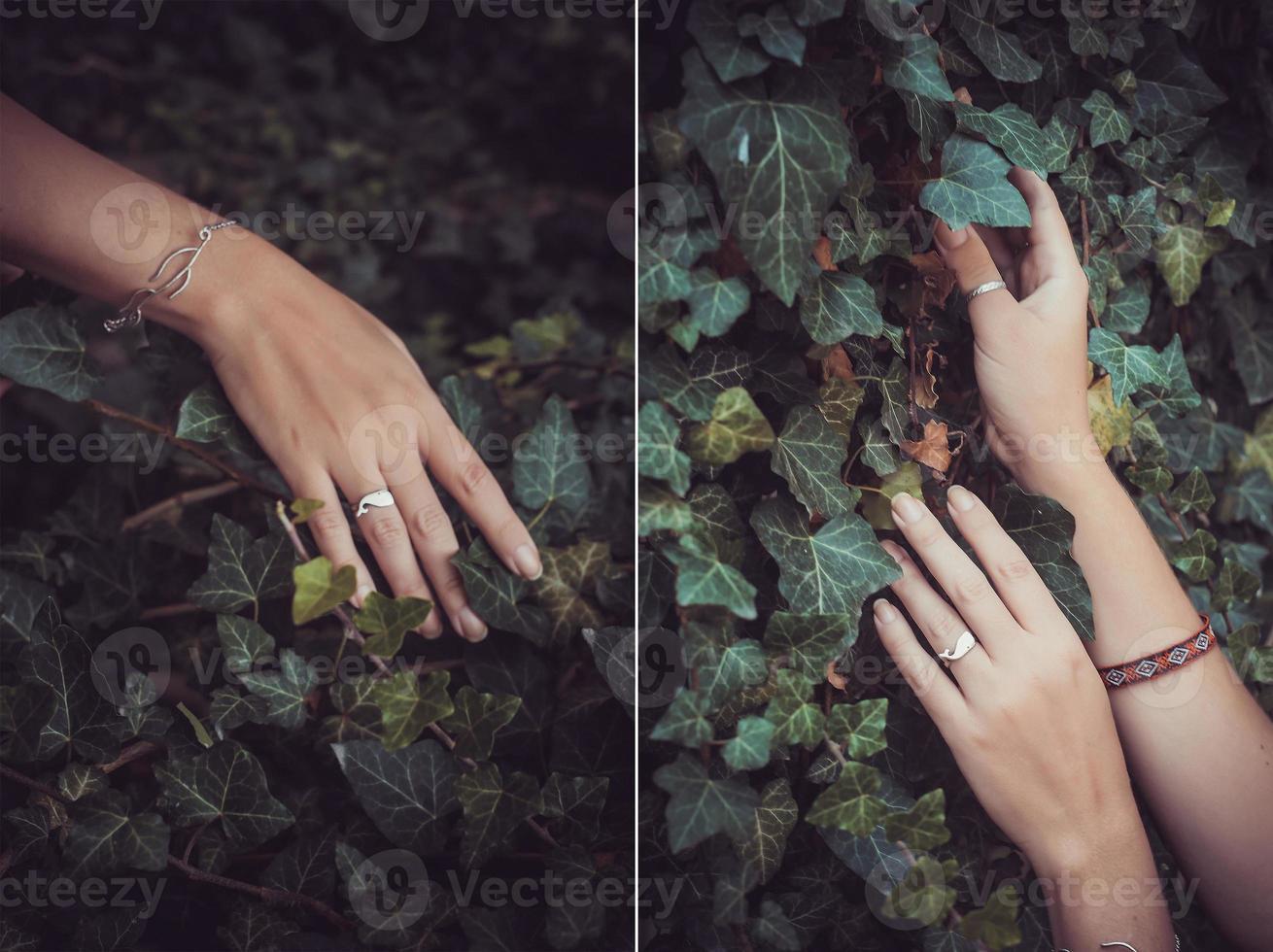 beautiful female hands photo