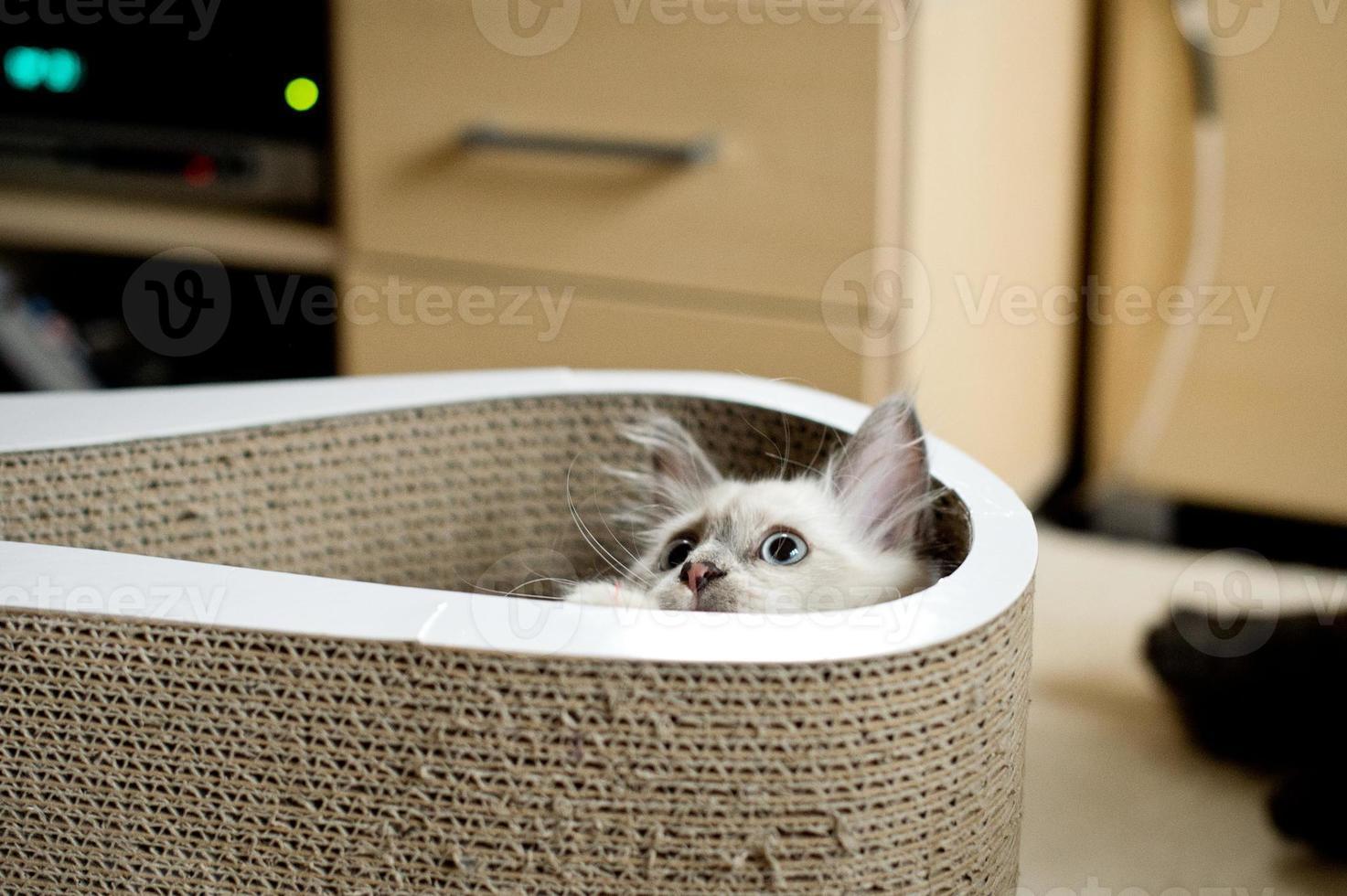 Hiding cat photo