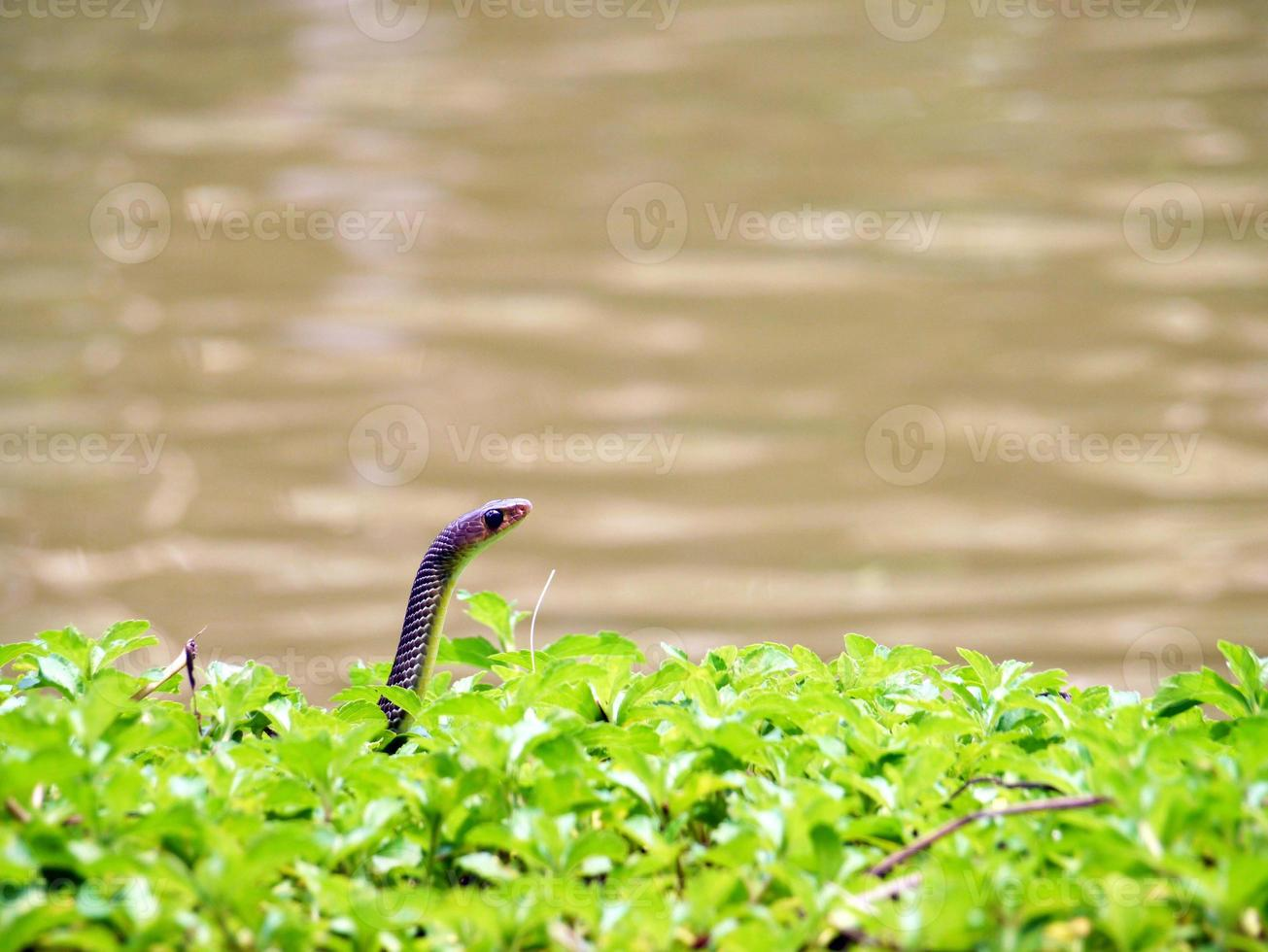 Snake in the wild photo