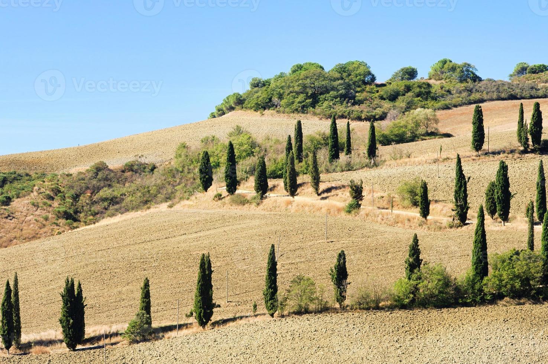 curva de ciprés en otoño foto