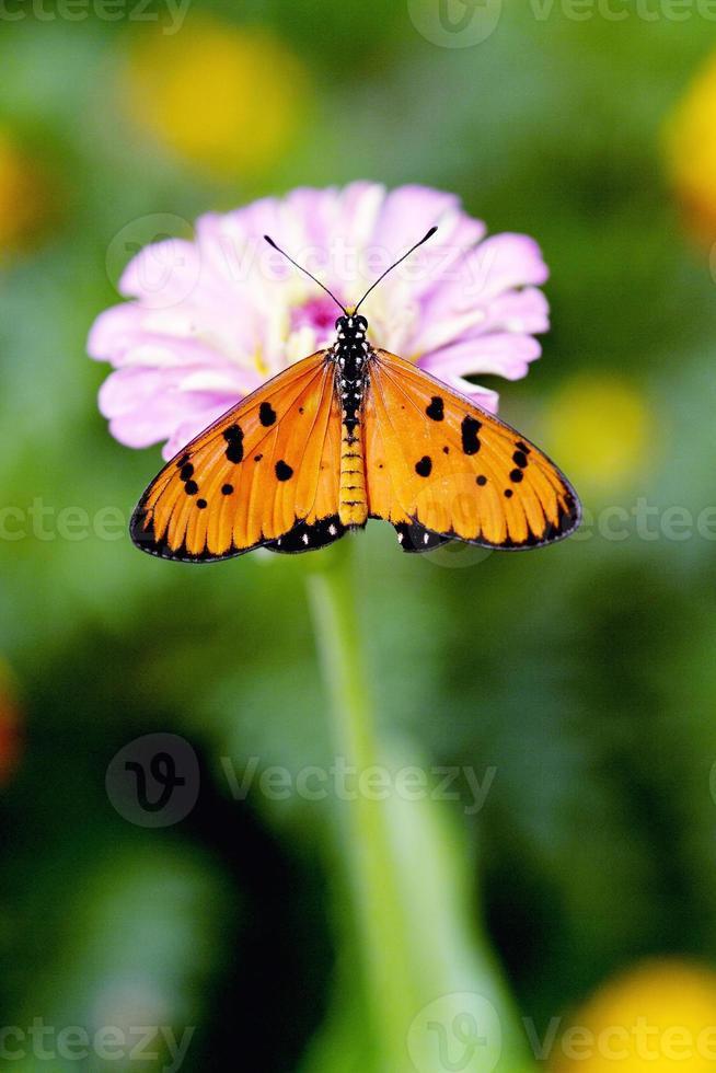 mariposa descansando sobre una flor foto