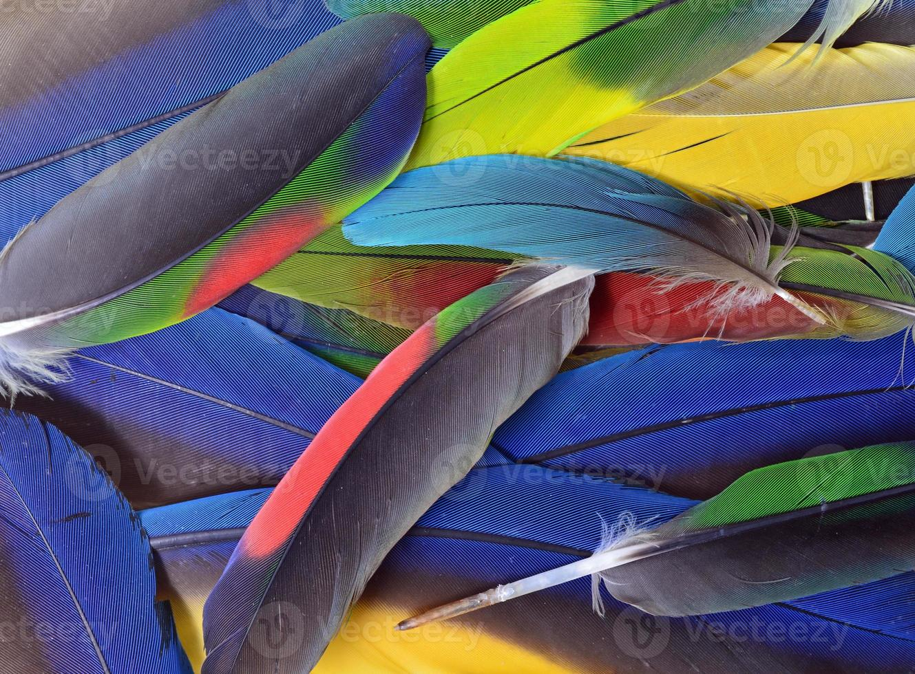 plumas de colores foto
