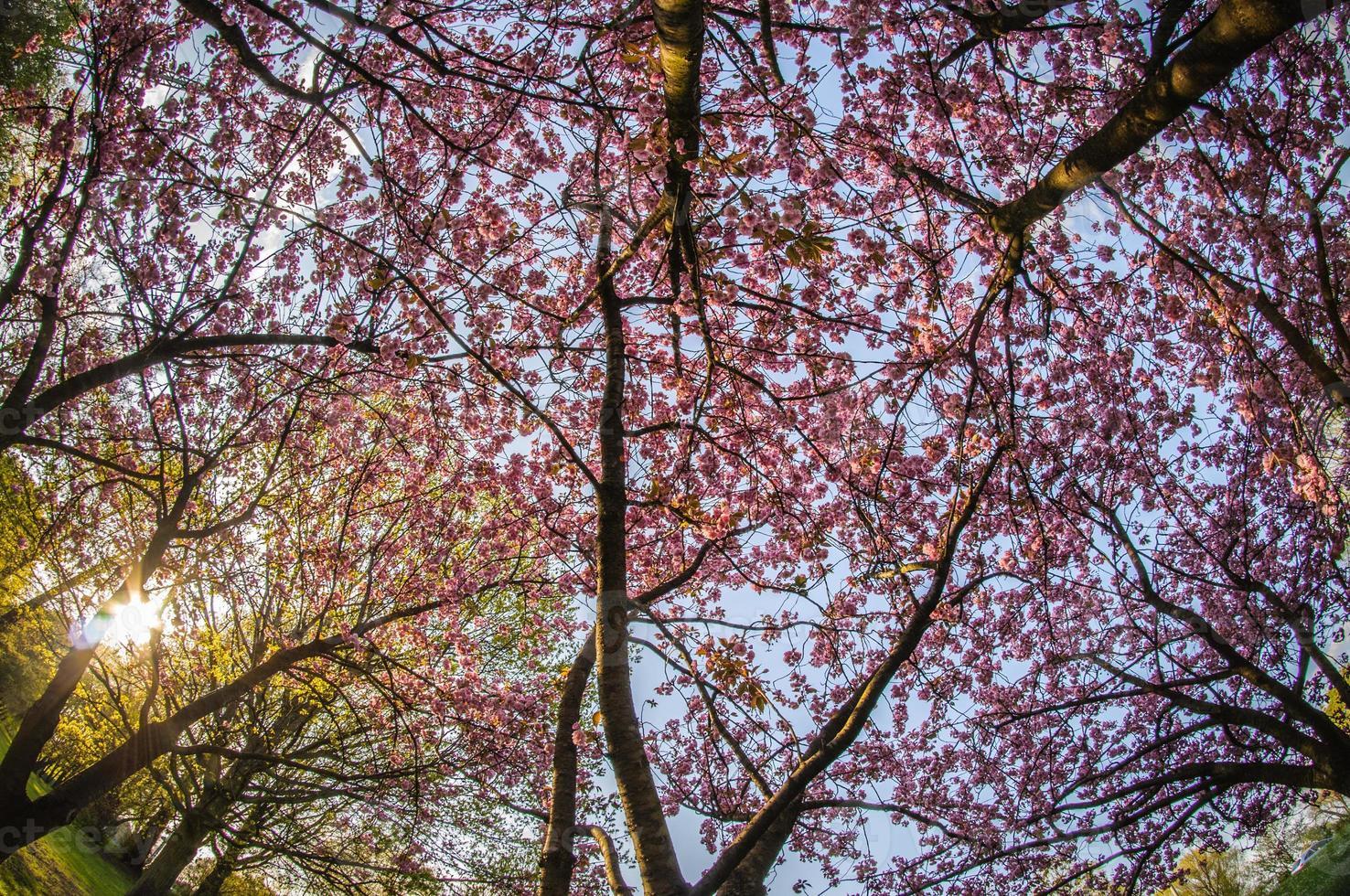 primavera en hamburgo foto