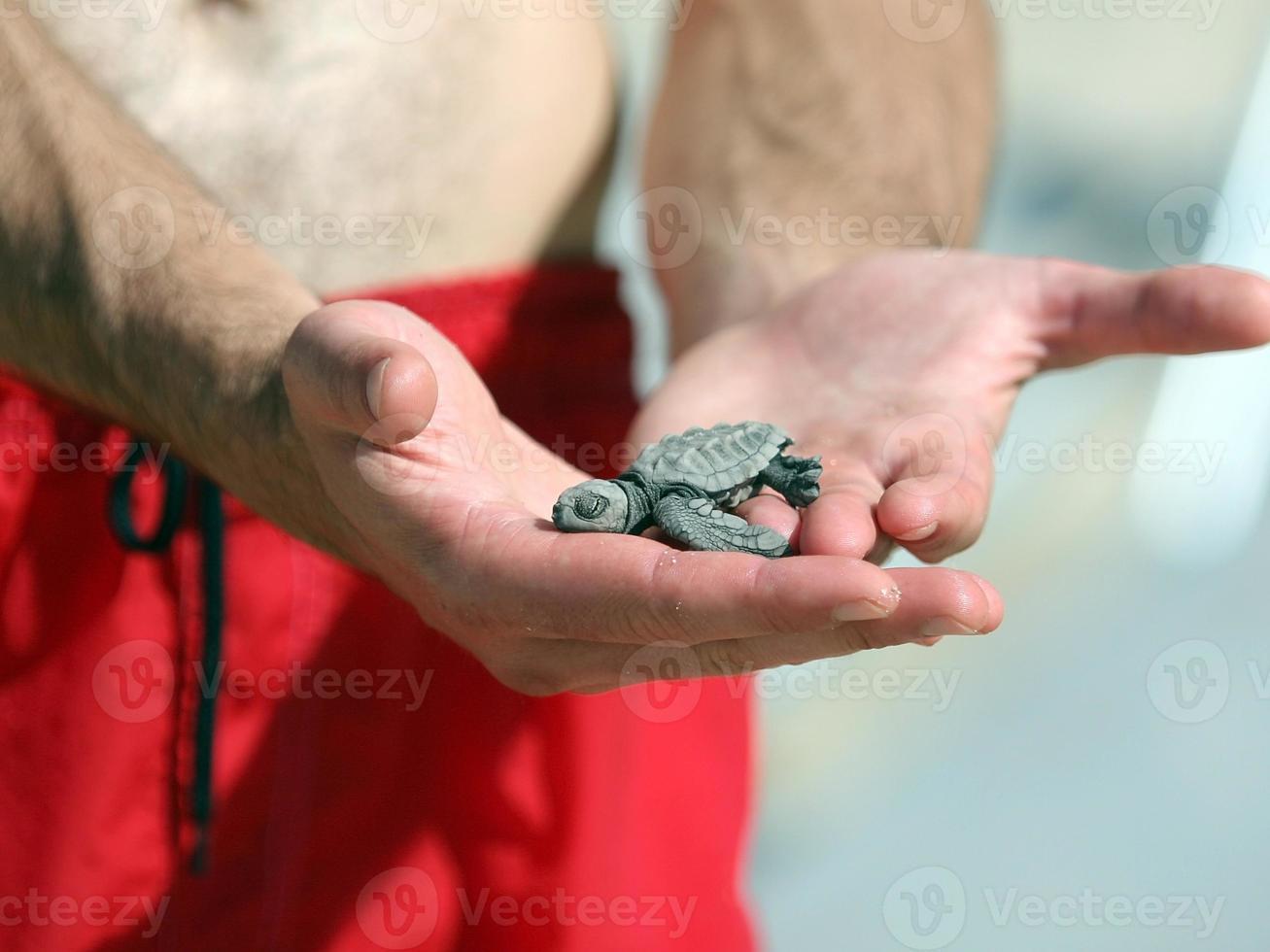 tortuga recién nacida foto