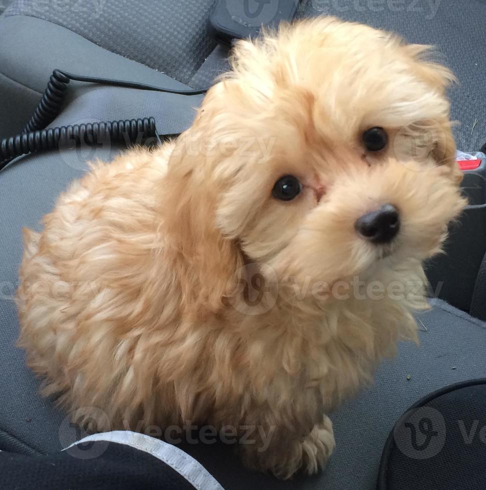 ojos de cachorro foto