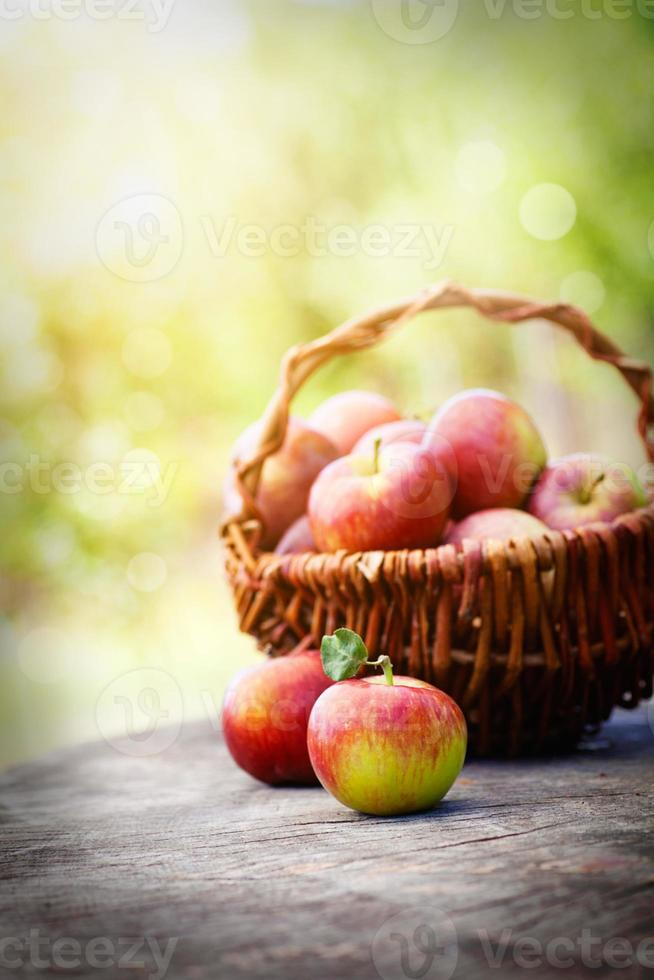 manzanas orgánicas foto