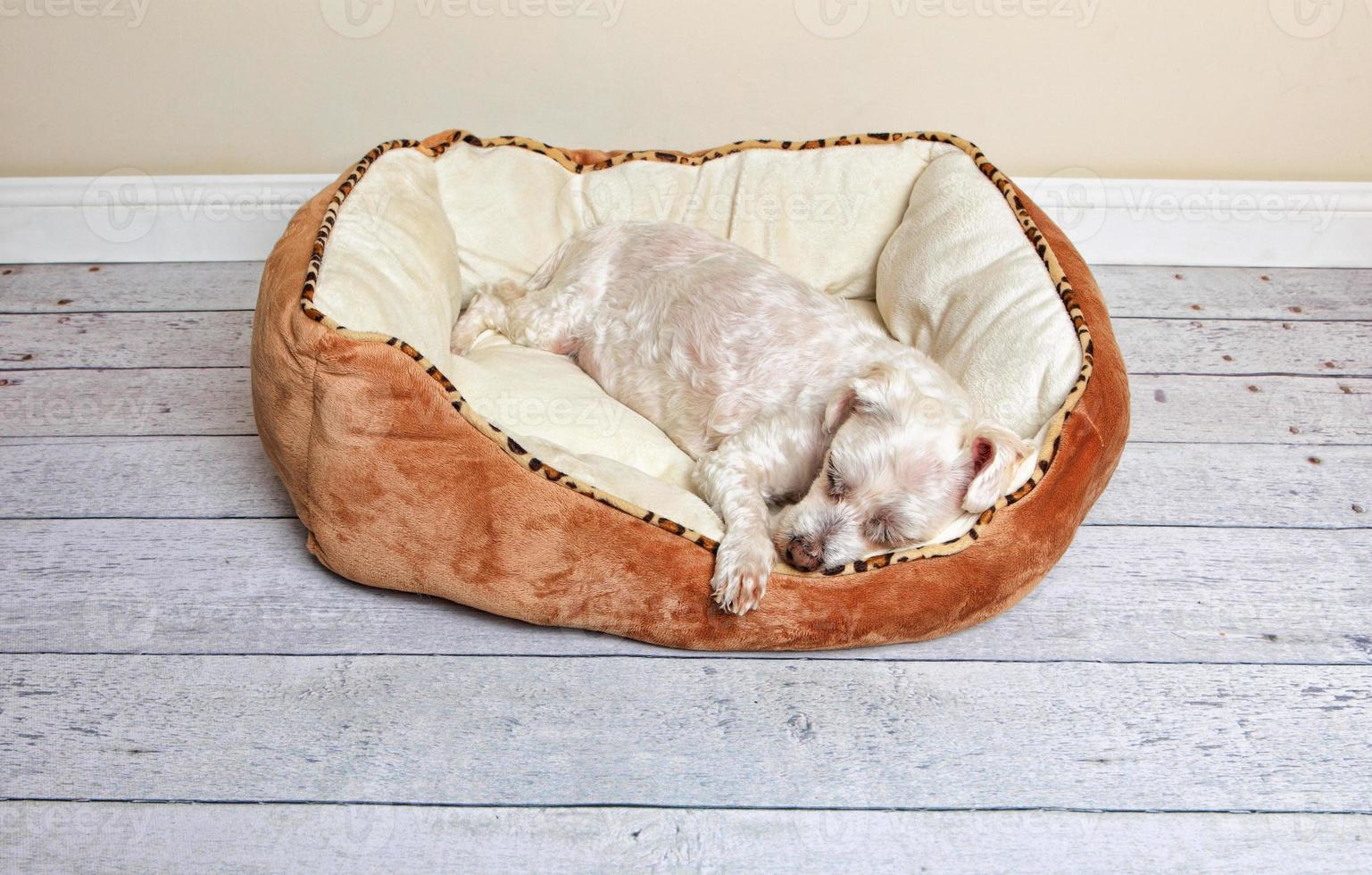 Dog sleeping in a pet bed photo