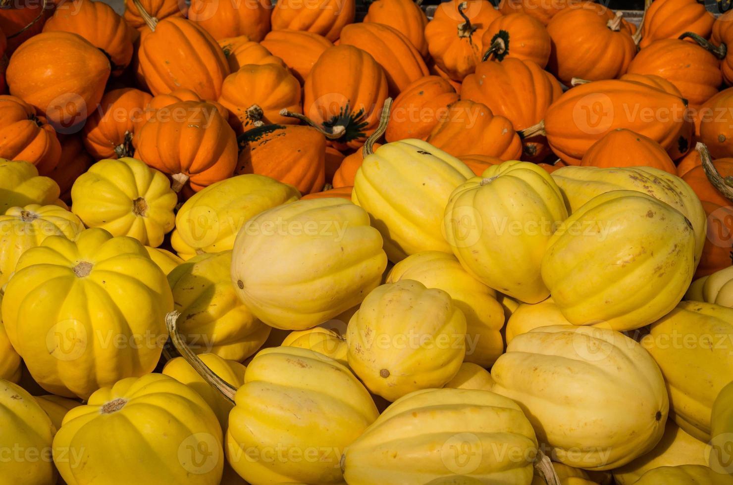 calabaza bellota amarilla y naranja foto