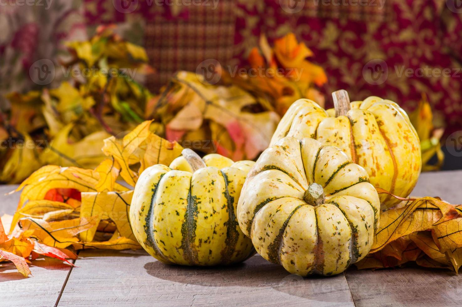 Fall squash with autumn leaves photo