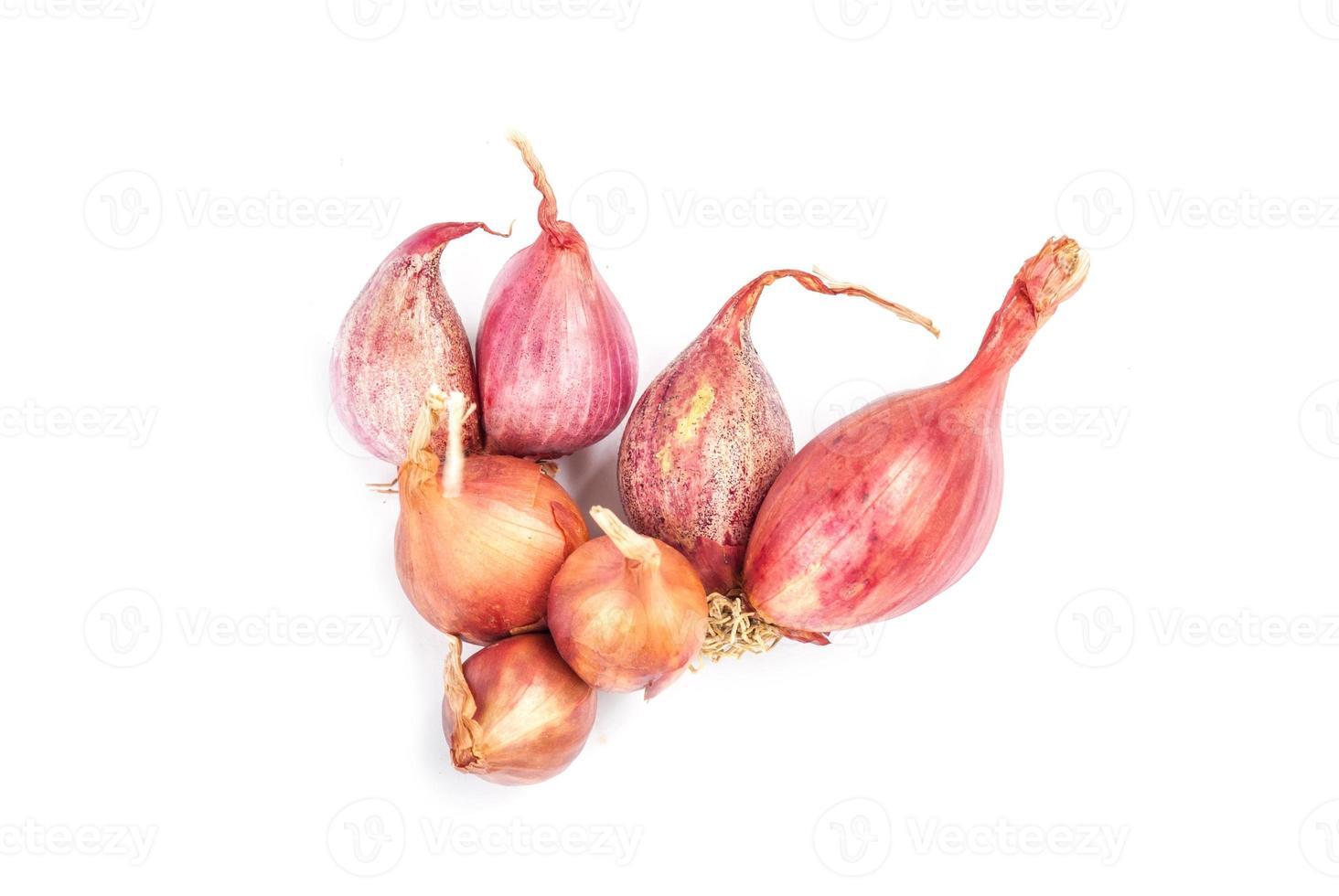 Shallot onions photo