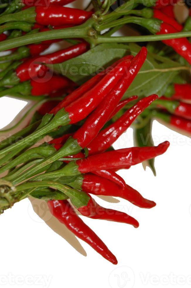 pimienta. Chile. agudo. rojo. productos utiles foto