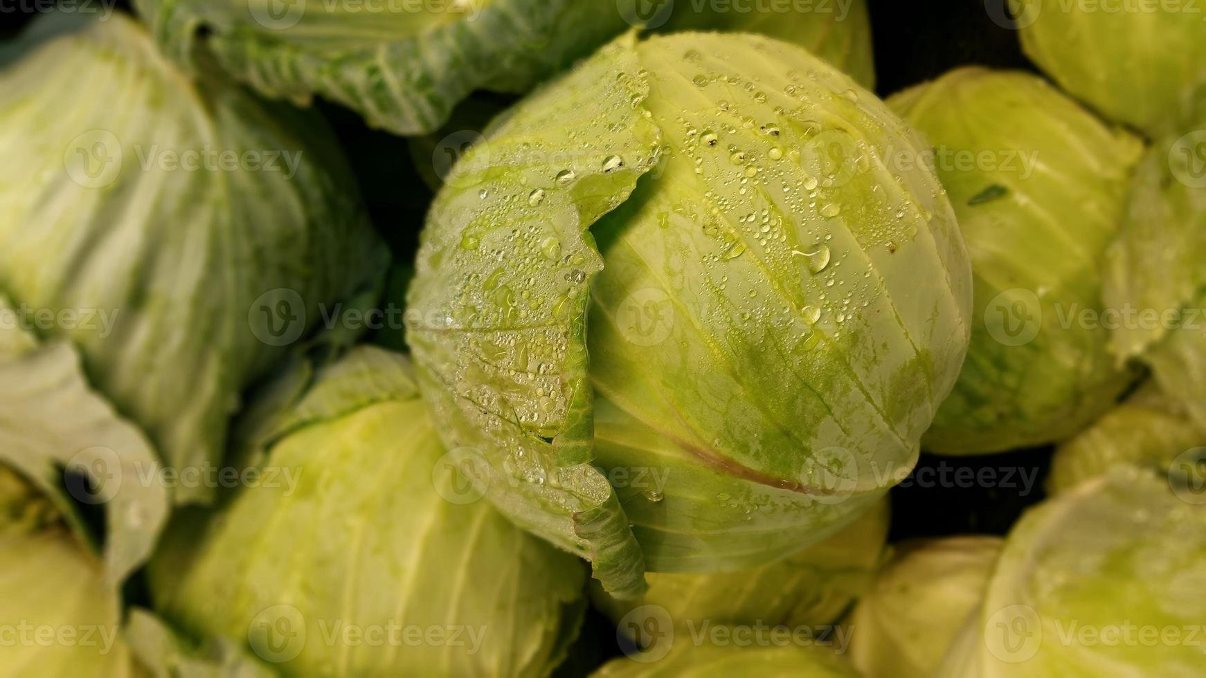 Cabbage photo