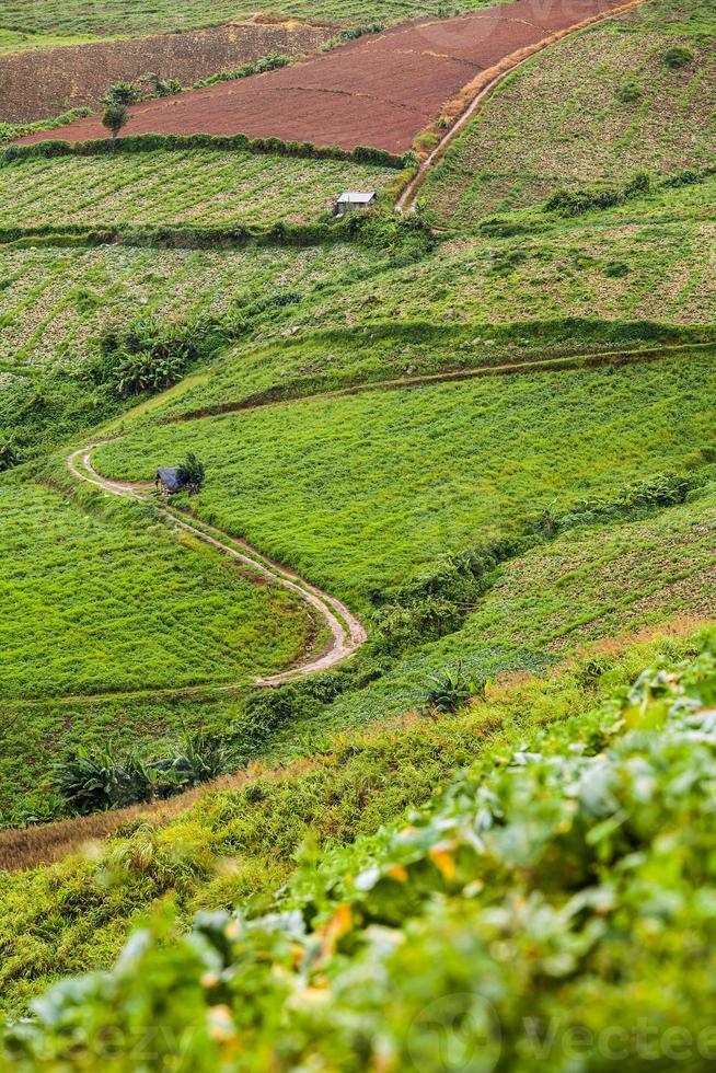 Cabbage farm photo