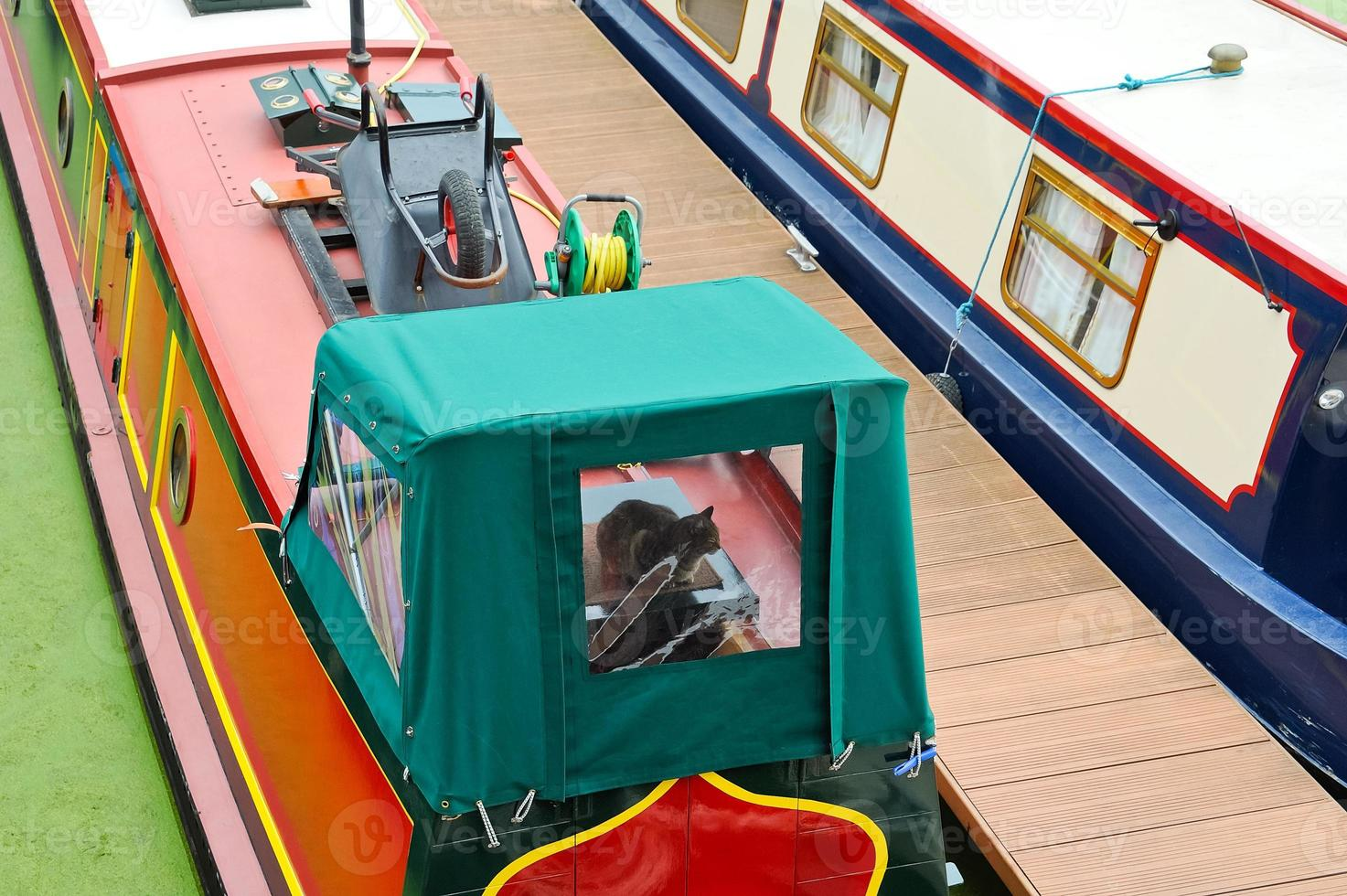 Cat on a houseboat photo