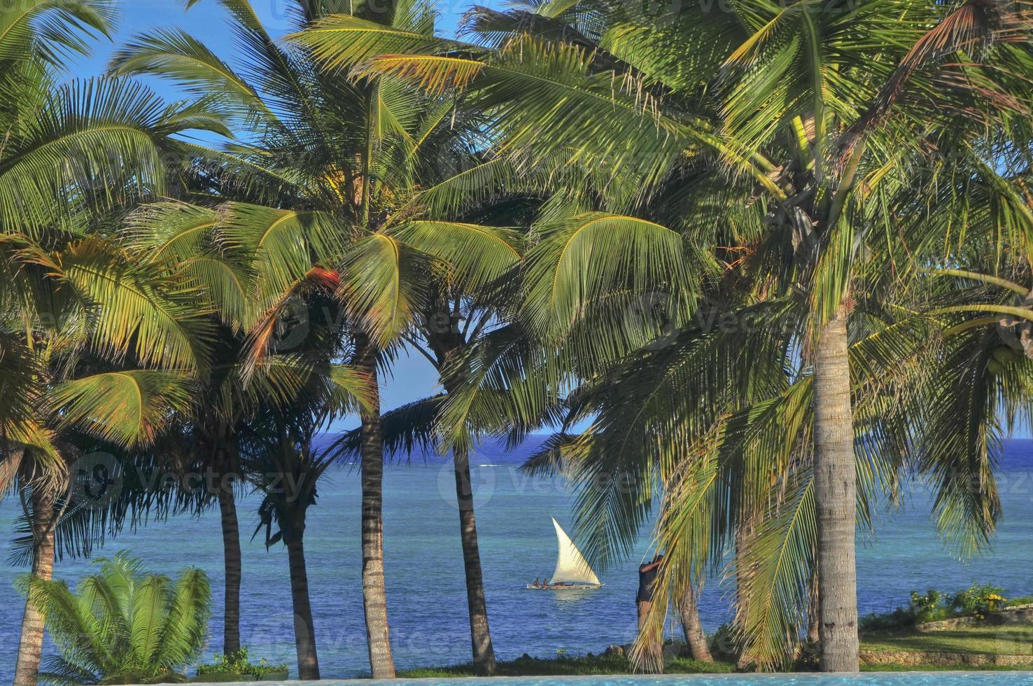 paisaje palmeras photo