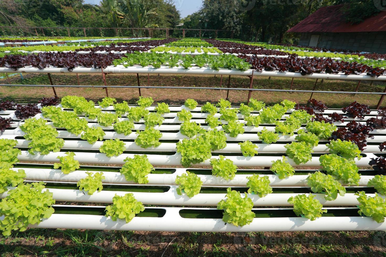 Organic Hydroponic vegetable farm 38 photo