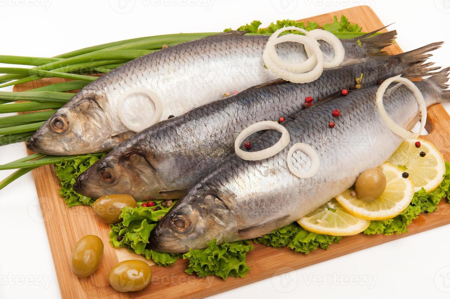 herring photo