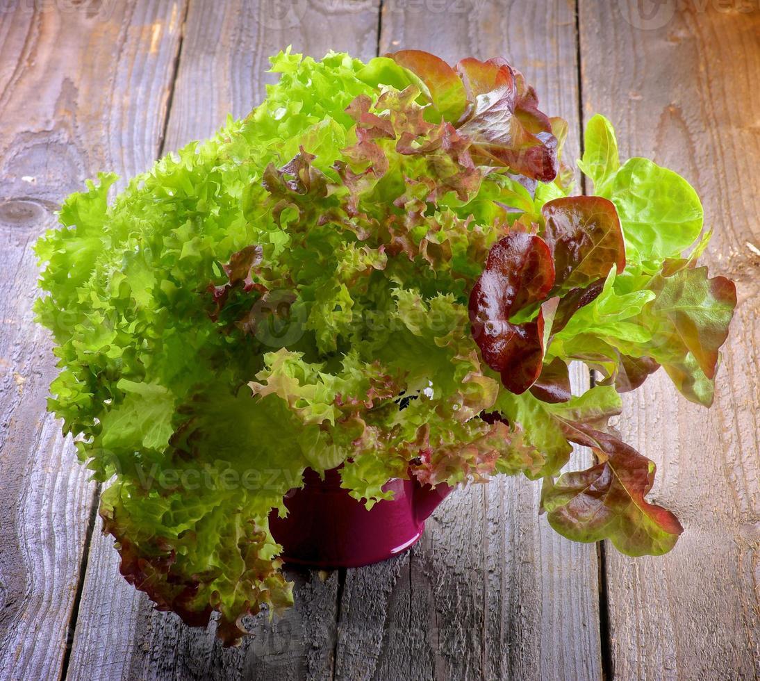 Mixed Lettuce photo