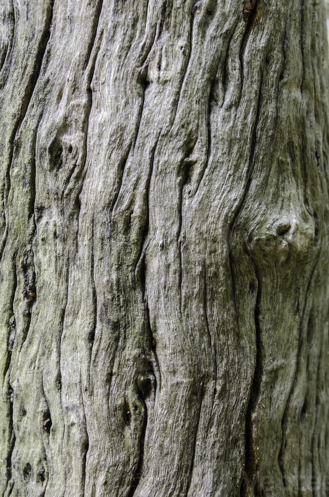 Tree surface photo