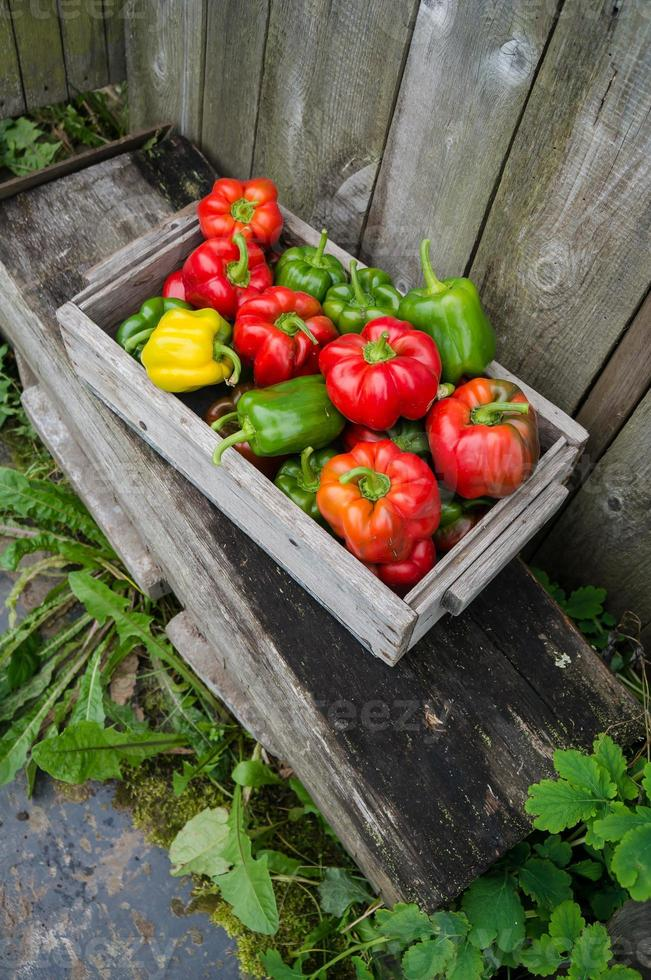 Peppers in a wooden box photo