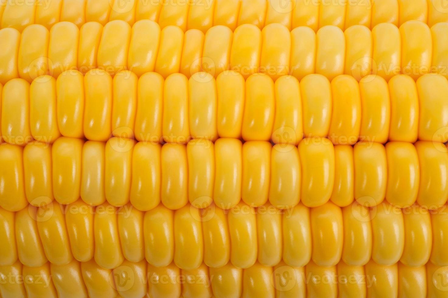 corn background photo