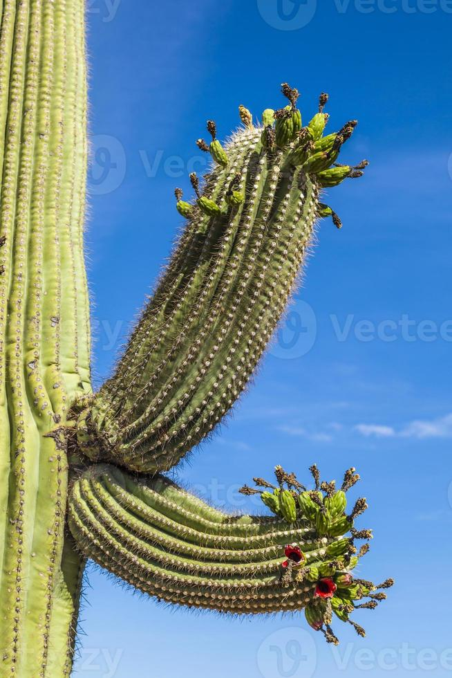 beautiful cacti in landscape photo