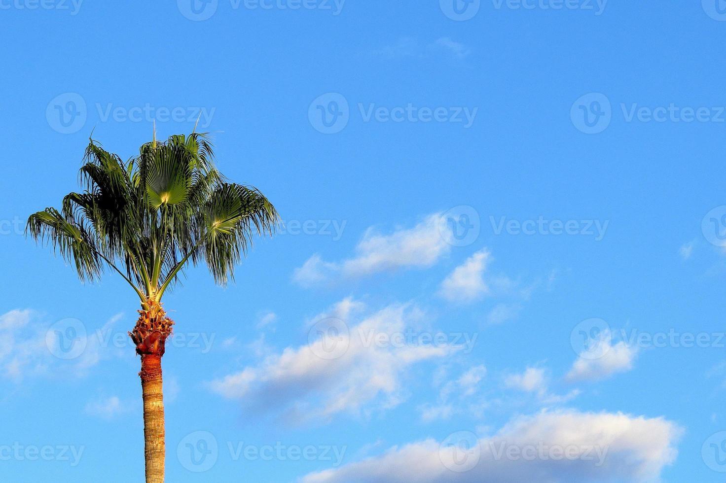palmera en el cielo de la mañana foto