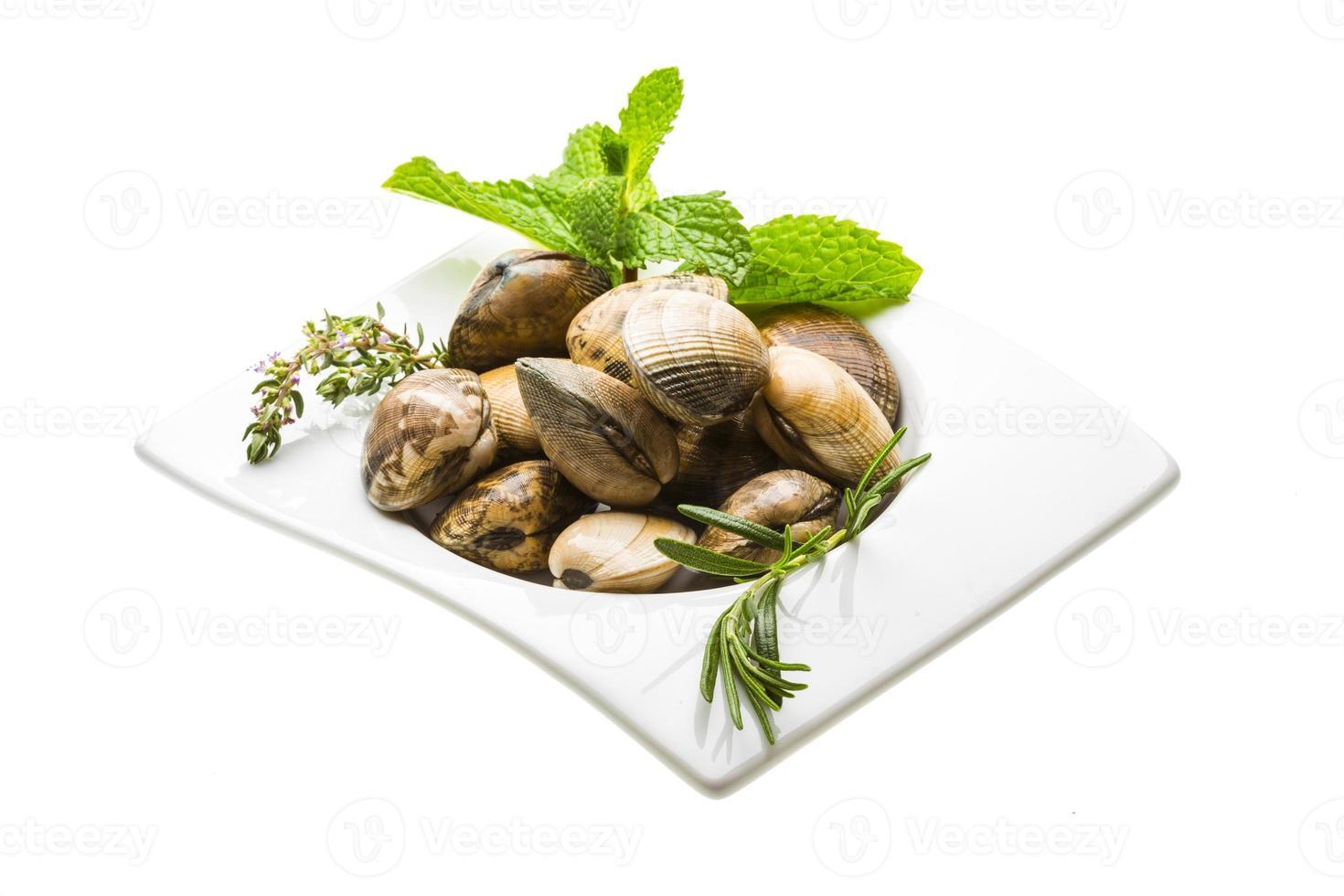 Spanish mollusc - Almeja photo