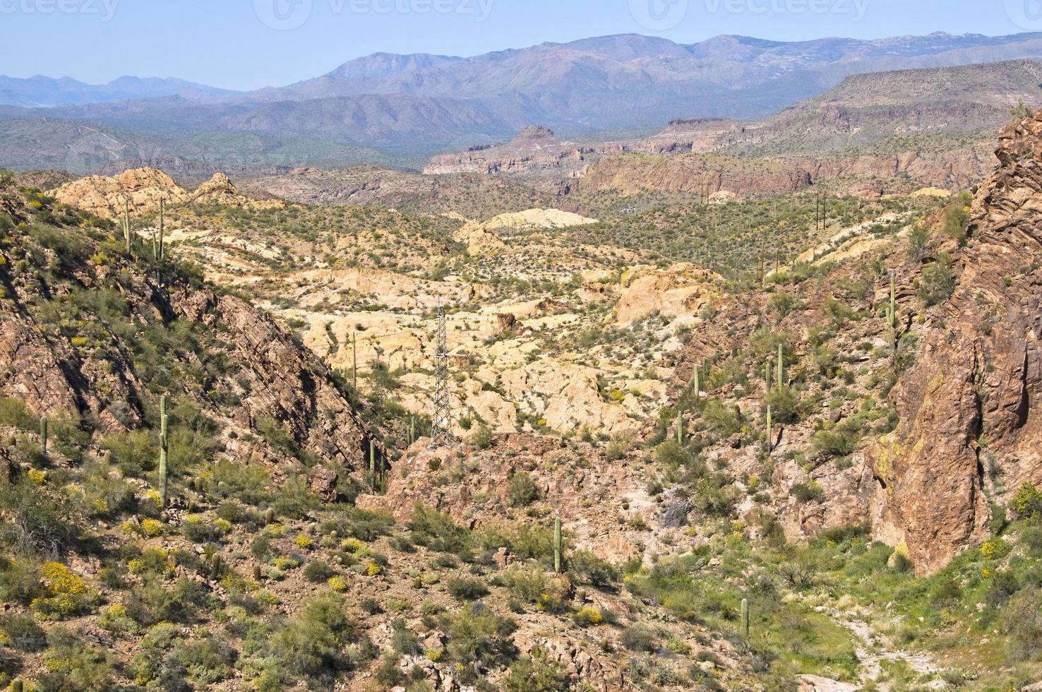 Desert landscape in Arizona photo
