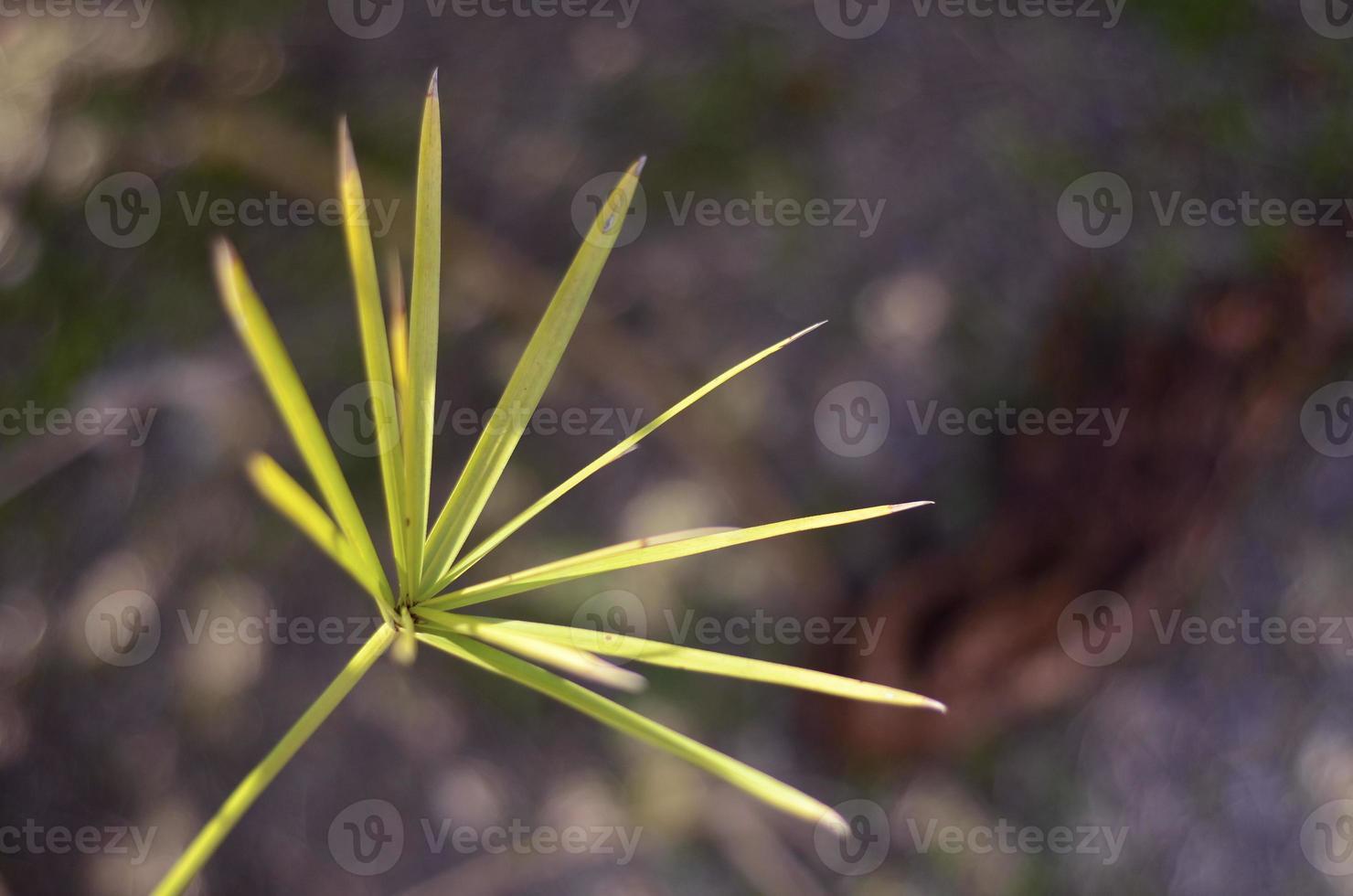 fondo de hierba foto