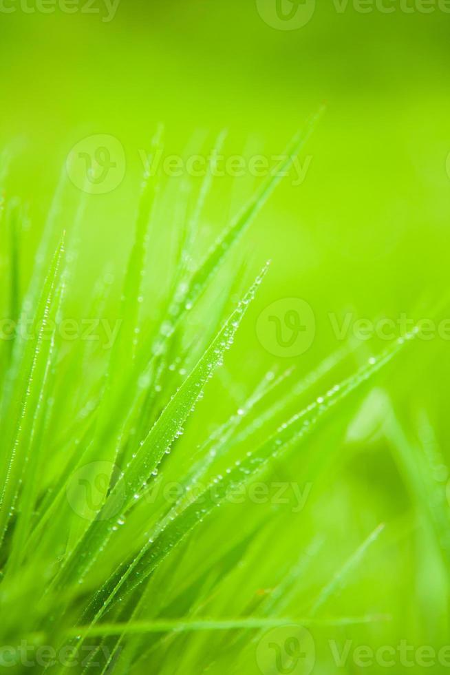 césped verde. foto