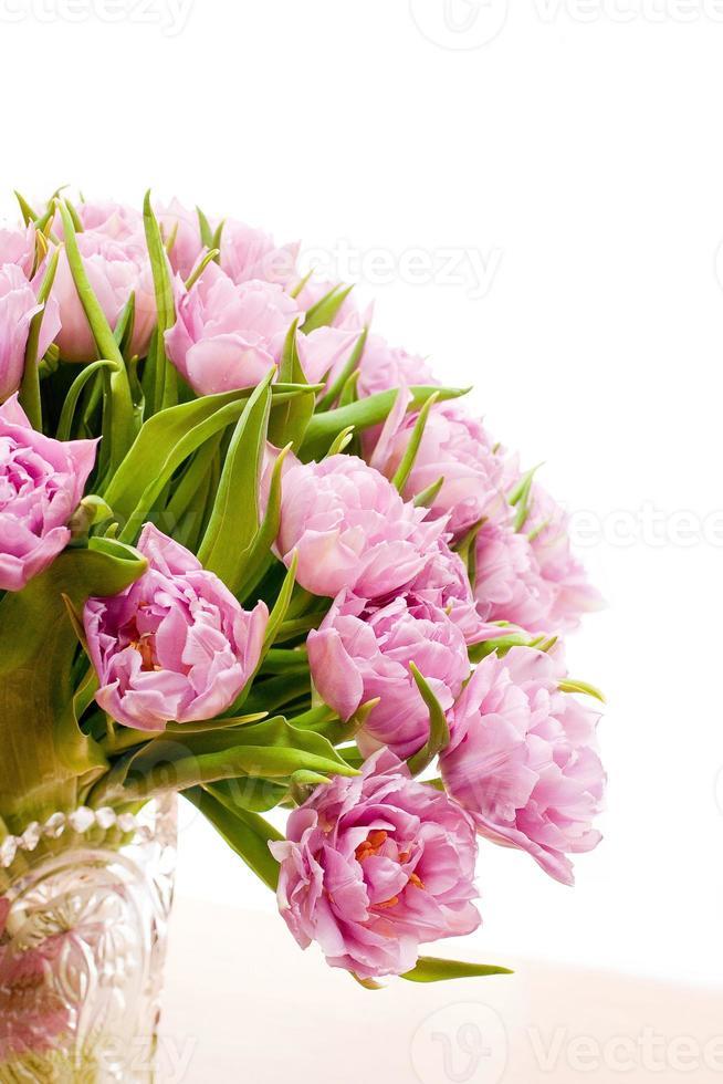 Beautiful purple tulips photo
