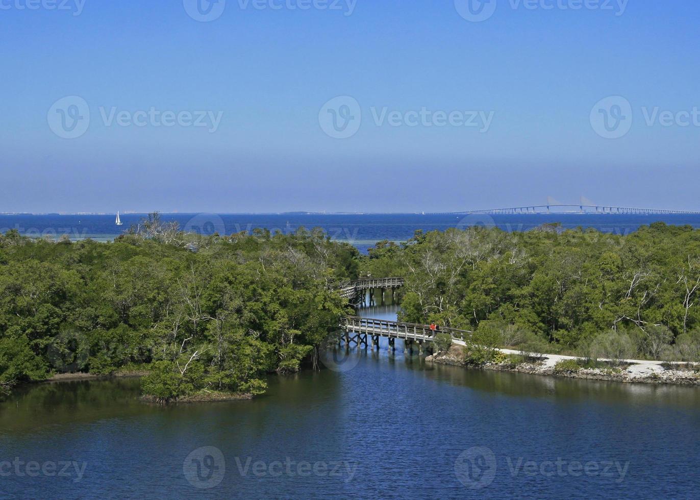 vista de la bahía de tampa foto