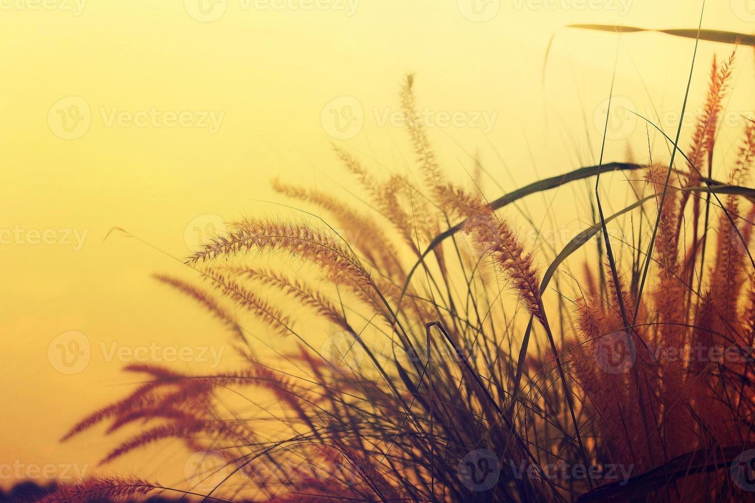 Prairie evening. photo