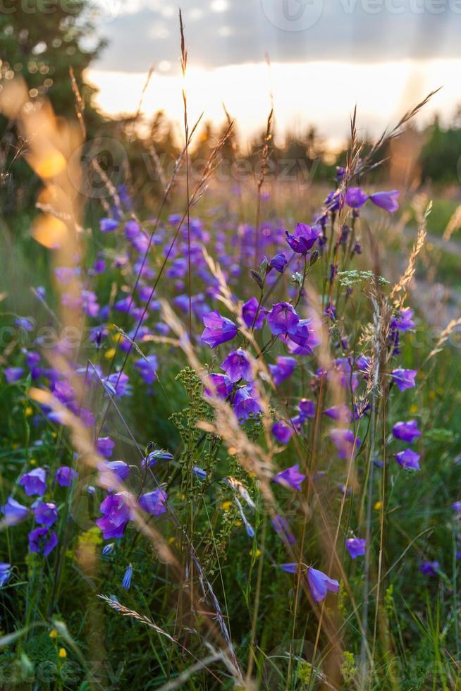 flores de verano foto