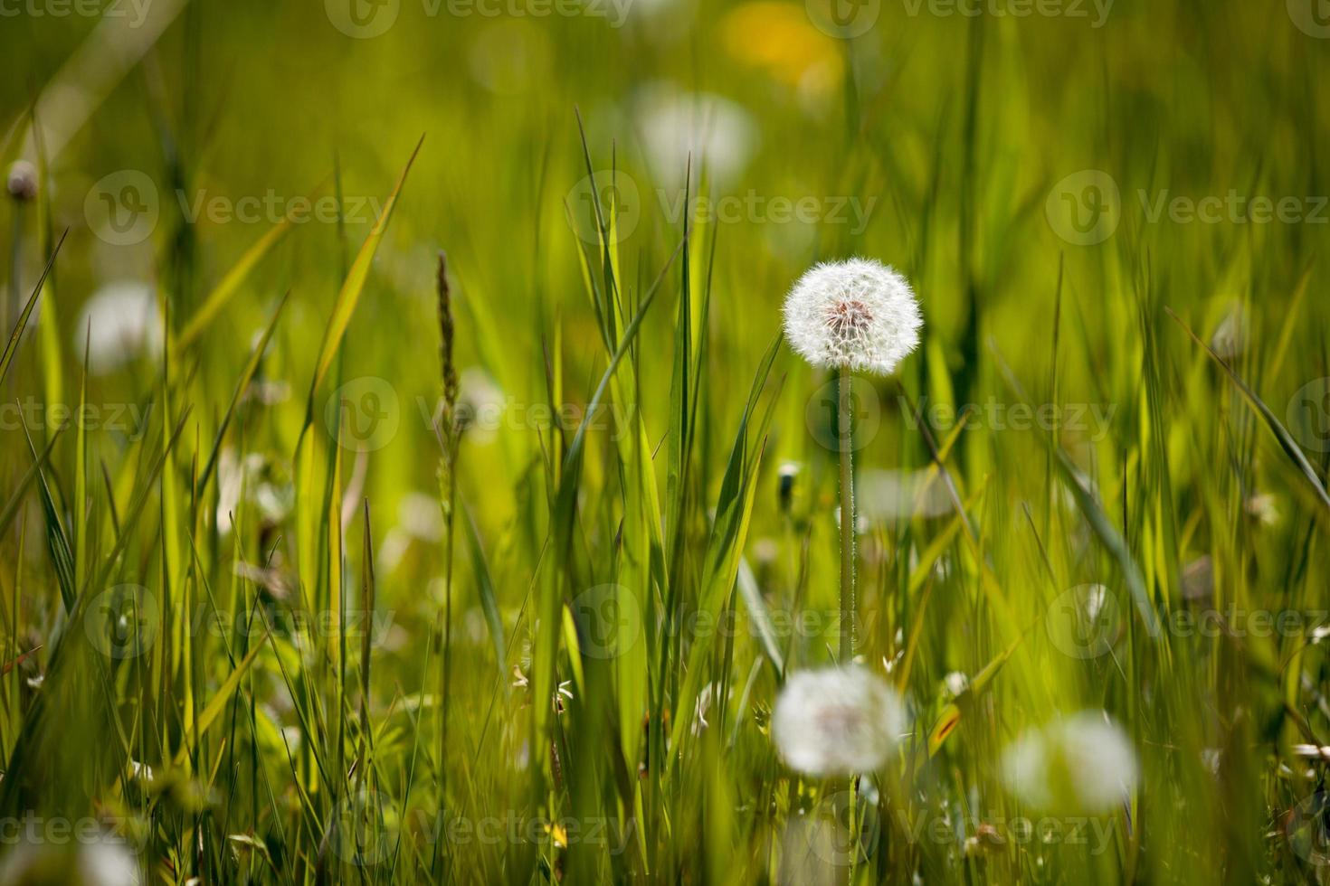 prado de verano foto