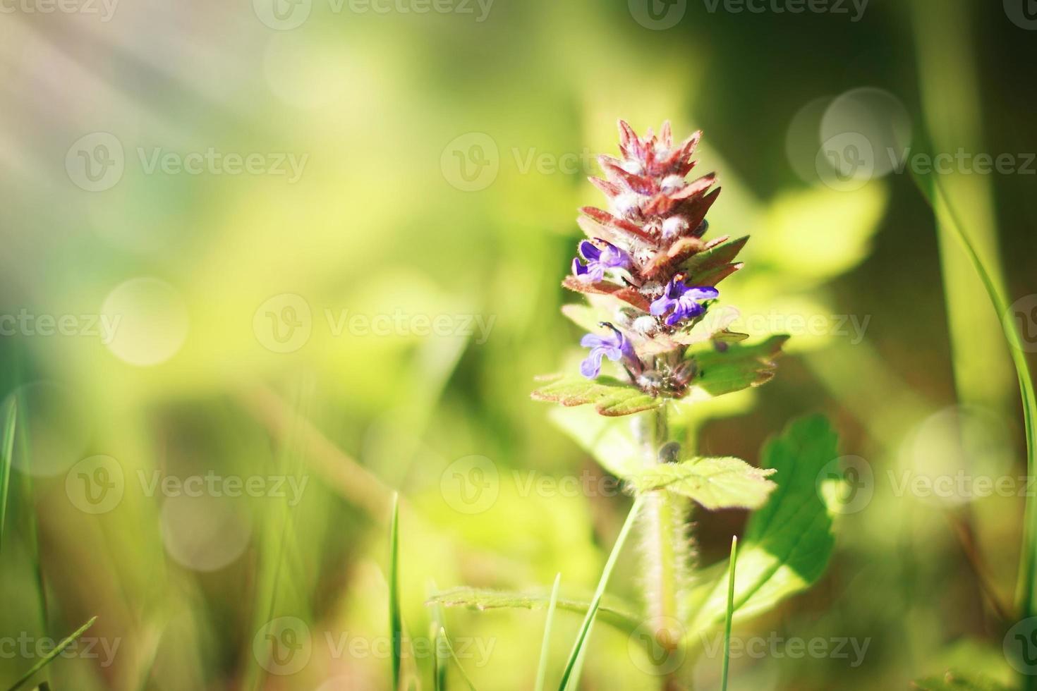 Summer meadow photo