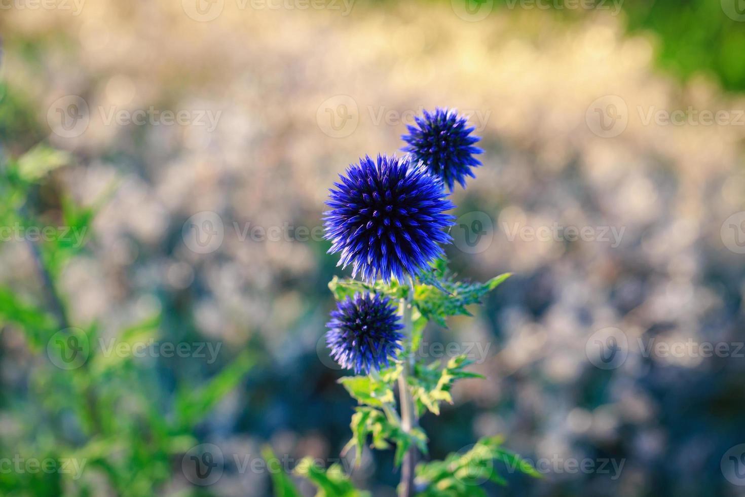 flor de verano foto