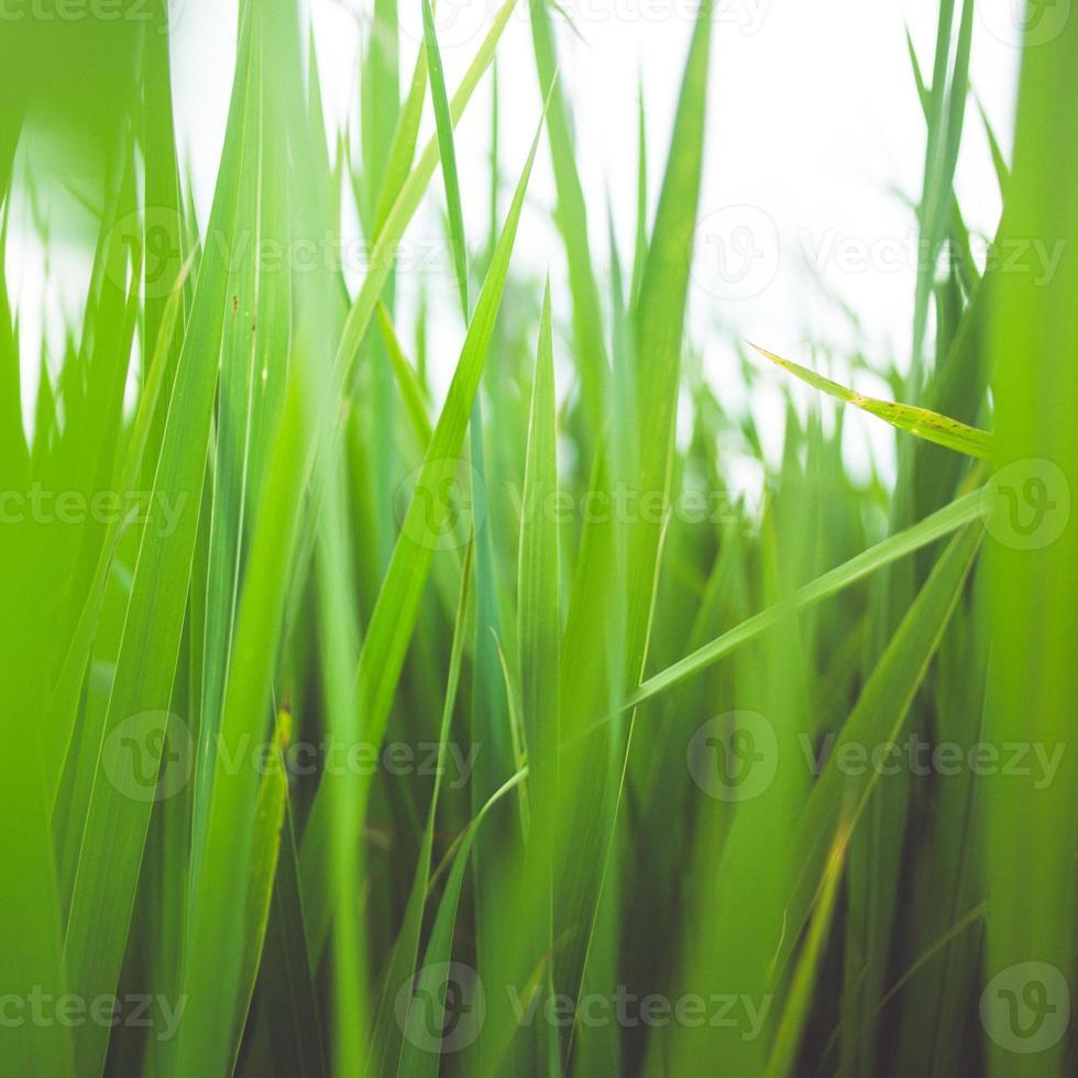 hierba verde de verano foto
