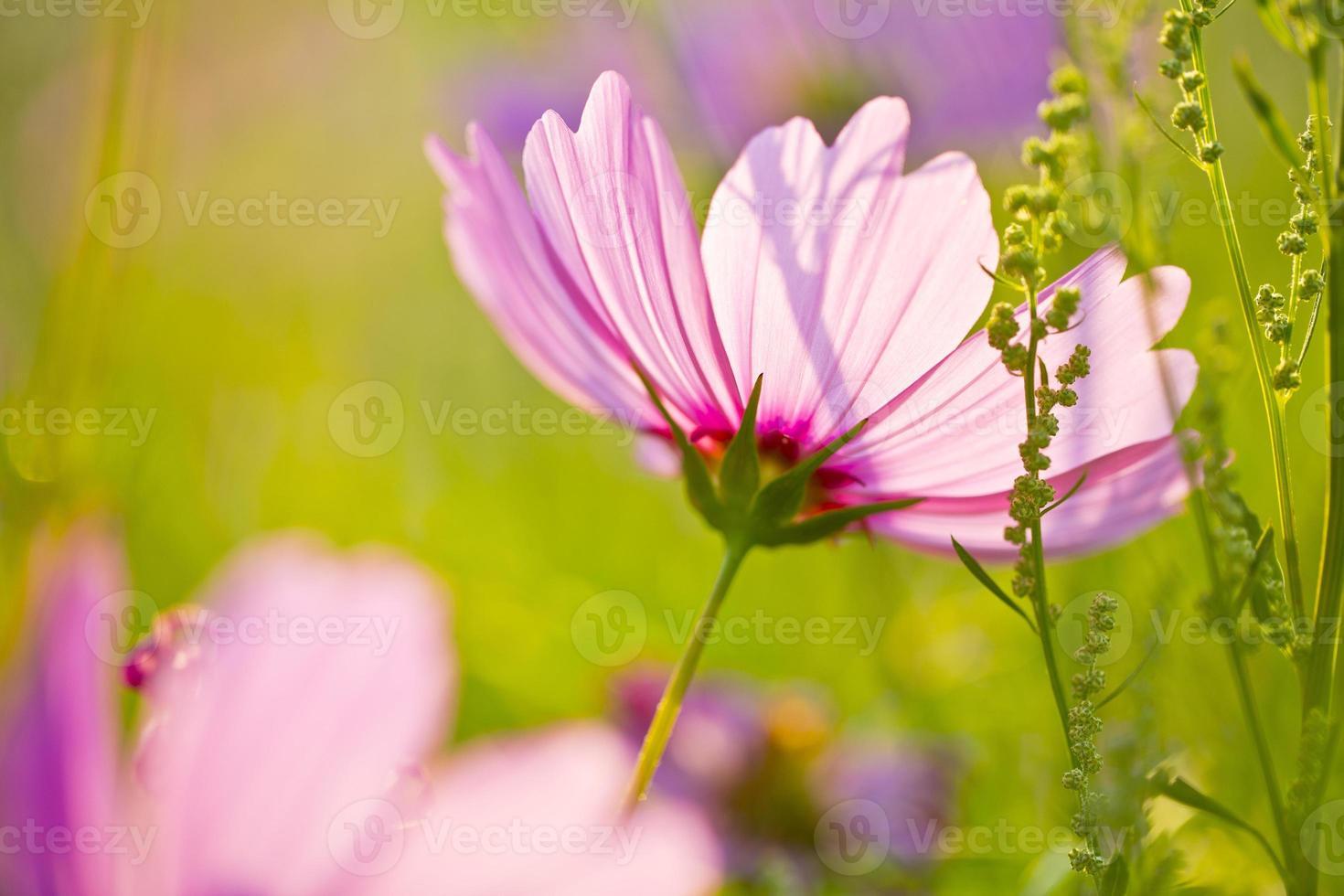 flores silvestres de verano foto
