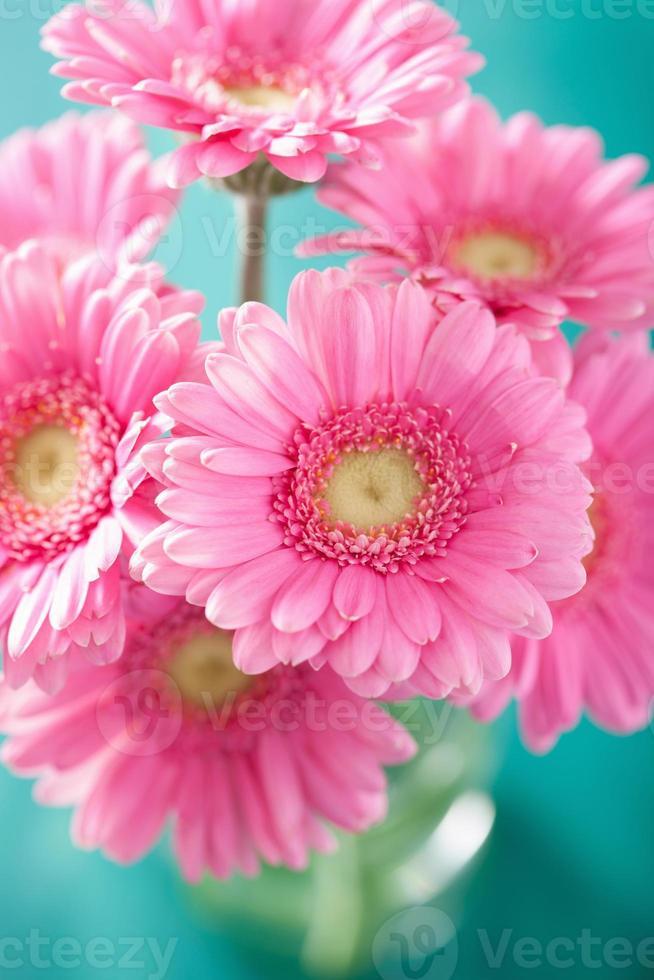 beautiful pink gerbera flowers bouquet in vase photo