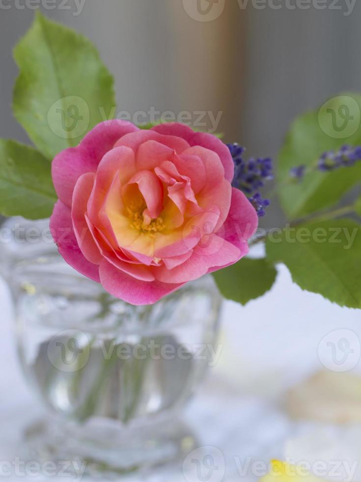 rosa rosa con hojas en un florero de vidrio foto