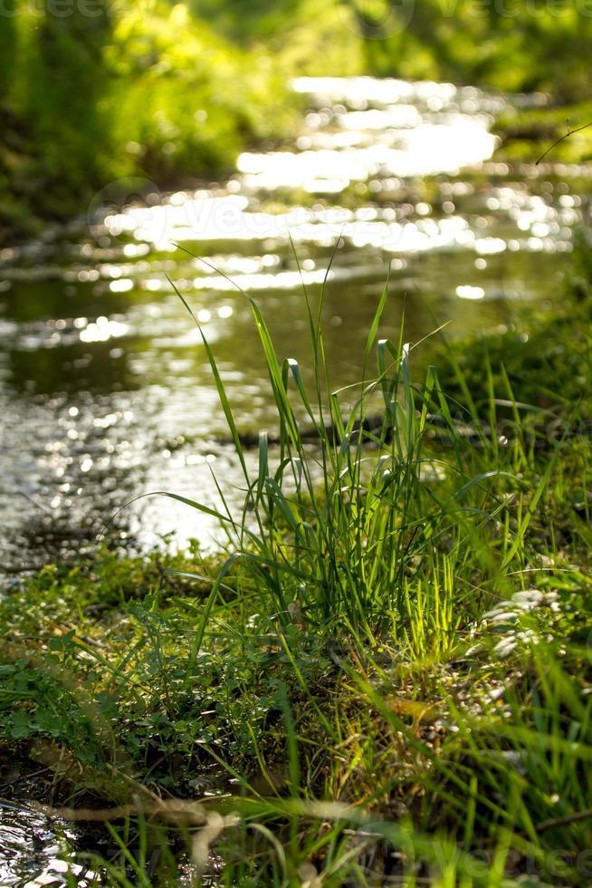 pequeño arroyo de primavera foto