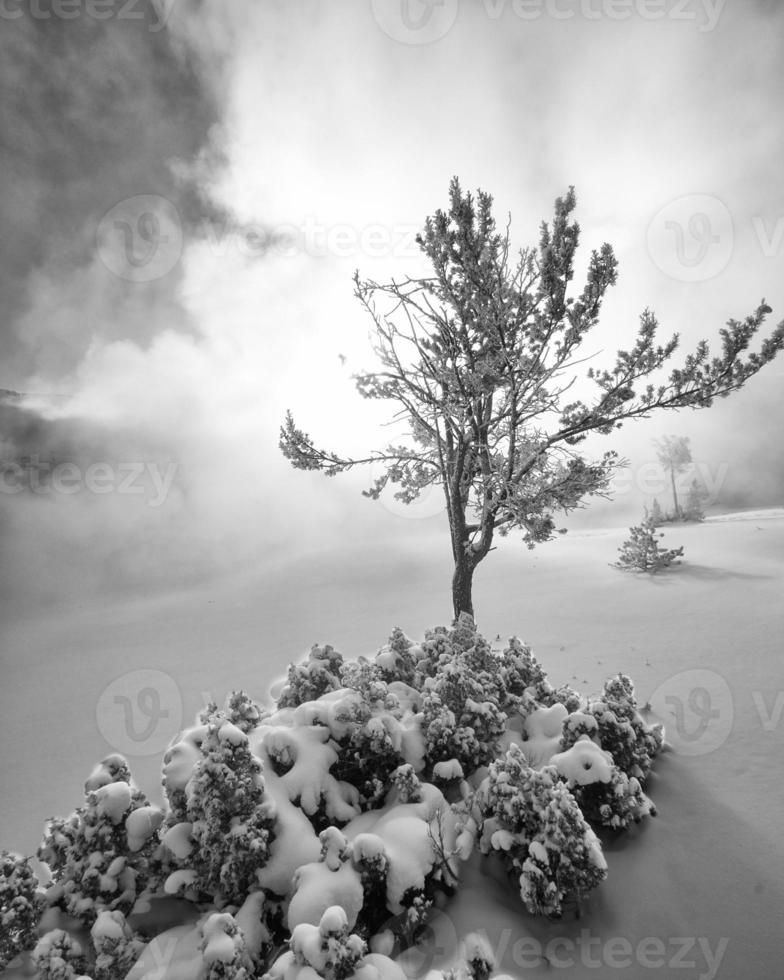 paisaje nevado en Mammoth Hot Springs - blanco y negro foto